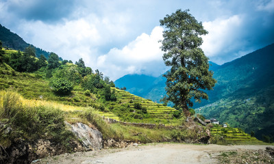 Green Landscape with path tree in Nepal