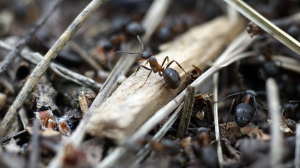 live ant close-up