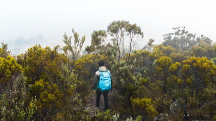 Man hiking in a forest in la Plaine des Cafres, Reunion Island