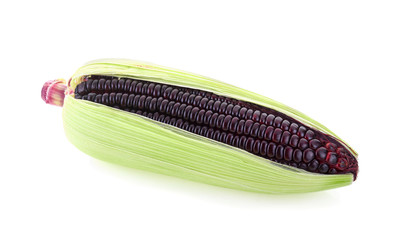 Fresh purple corn isolated on white background