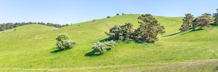 Hügelige Weidelandschaft