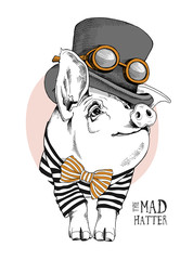 Pig in a in a striped cardigan, in a bow tie and with a steampunk Top hat. Vector illustration.