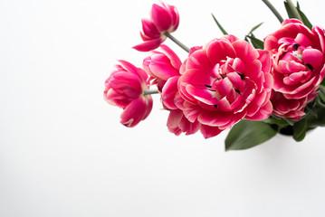 Tulpen (gefüllte Blüten)