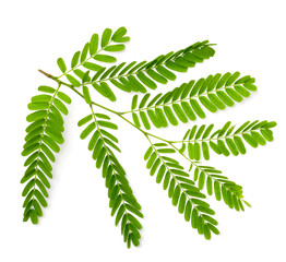 fresh tamarind leaves isolated on white, top view