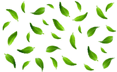fresh mint leaves isolated on white background pattern