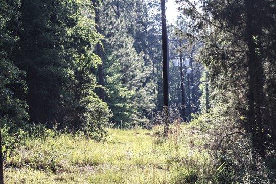 Gab between the trees