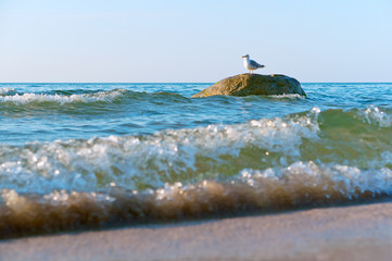 seagull on a stone in the sea, sea gull alone in the waves standing on a stone