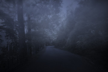 Forest road at night