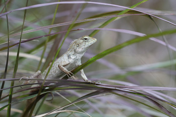 Green chameleon stand holding on tree leaf in the jungle, small lizard dragon hunting insect for food, animal wildlife backgrounds