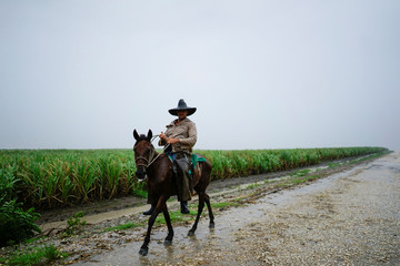 A farmer rides a horse next to a sugar cane field during the passage of the Subtropical Storm Alberto in Las Mangas