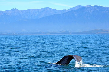 New Zealand. Tail of the whale
