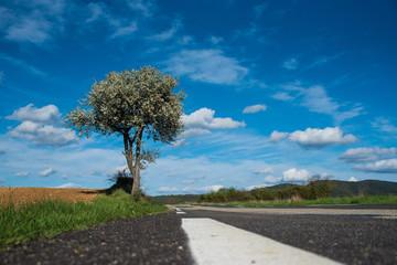 Paysage route et arbre