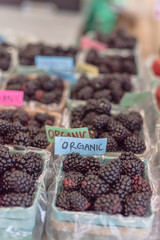 Close-up, selective focus heap of organic blackberries in basket with plastic liner. Fresh blackberry on display at local farmer market in Grapevine, Texas, USA.