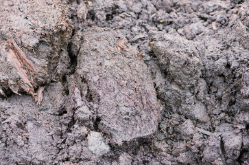 There are the lumps of peat soil. It is the fertilizer of vegetable and animal origin.