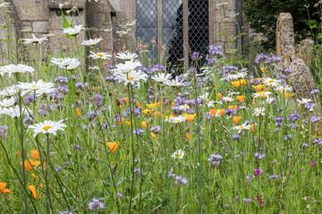 Wild flowers in an English churchyard