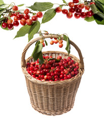 fresh red cherries in a basket on a white background
