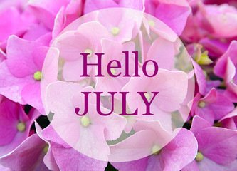 Hello July greeting on natural pink hydrangea flowers background.Summer concept. Selective focus.