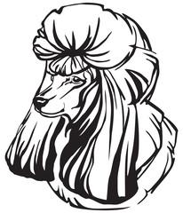 Decorative portrait of Poodle vector illustration