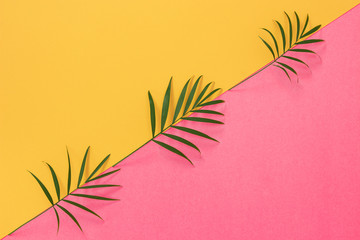 Palm leaves on colorful yellow and pink background