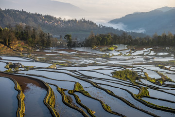 The Rice Terraces.