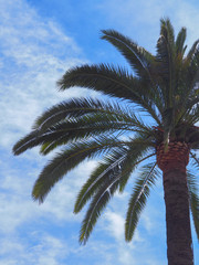 Palm tree photo.