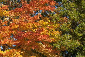 Autumn fall foliage green yellow orange