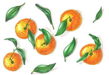group of five tangerines with leaves hand-drawn illustration on white background