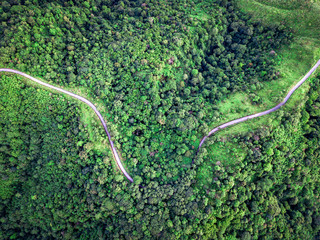 Top view curvy road in the middle of green forest. Amazing nature landscape. Aerial view from flying drone.