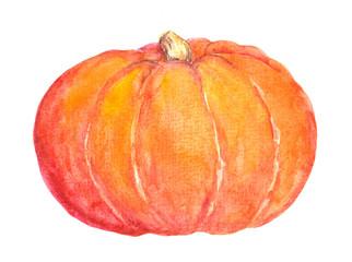 Pumpkin. Watercolor vegetable