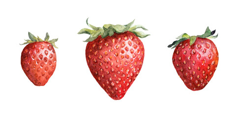 Strawberry berry. Watercolor painted drawing