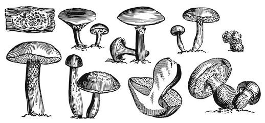 Mushrooms Set - fungi #vector #isolated - Pilze Set
