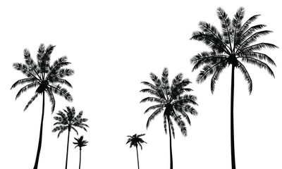 Set signs black silhouettes isolated tropical palm trees on a white background. Detailed symbols. Vector