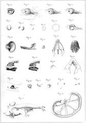 Illustration of animal