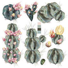 Collection of vector realistic cactus with flowers