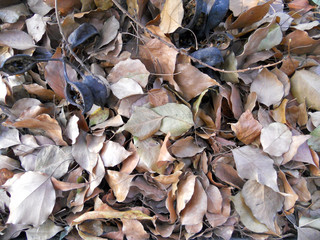 Fallen leaves, Foliage background