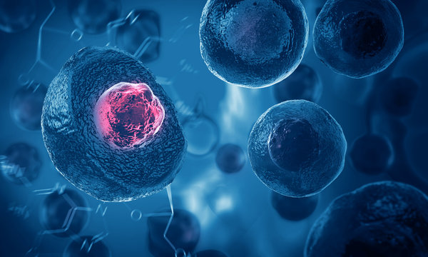 Embryonic stem cells , Cellular therapy