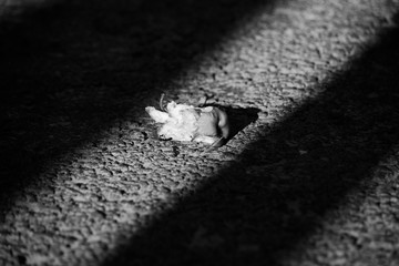 Black and white photo with an apple stump on the asphalt in a dramatic light