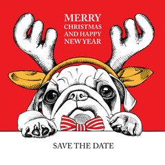 Christmas card. Portrait dog Pug in reindeer antlers and with tie on red background. Vector illustration.