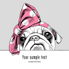 Portrait of a Pug in the pink headband. Vector illustration.
