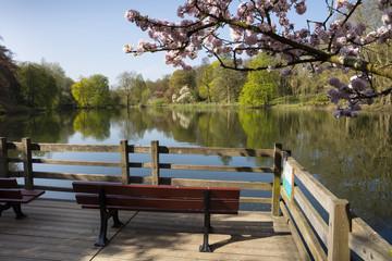 Frühlingslandschaft im Rombergpark, Dortmund, Nordrhein-Westfalen, Deutschland