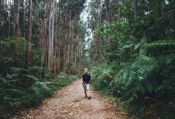 Little boy tourist backpacker walks through forest with giant trees