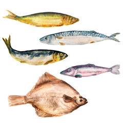 Set of watercolor images of different fish