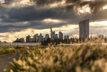 Gewächshäuser in Frankfurt Oberrad mit Skyline und der Europäischen Zentralbank im Abendlicht