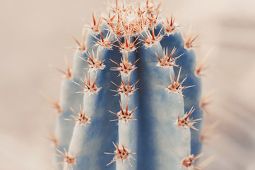 Background with big cactus, toned image