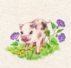 Micro Pig and Wildflowers on Green Grass