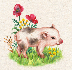 Micro Pig Walking on Green Grass