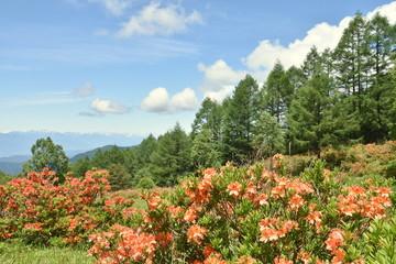 レンゲツツジが咲く山 松本市袴越
