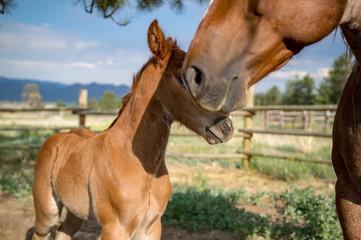 Brown Colt and Mother