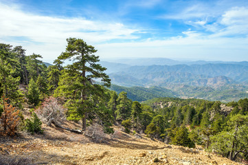 Mountain forest landscape, Troodos nature trail, Cyprus