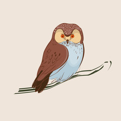 Hand drawn owl. Brown owl sitting on branch. Vector illustration